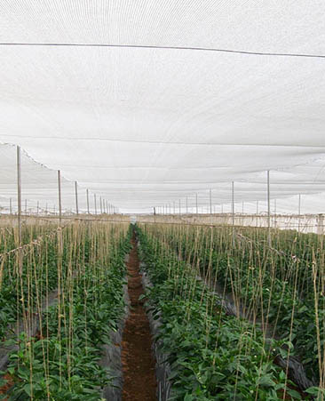 Greenhouse Nets